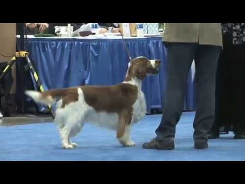 The 2018 Flushing Spaniel Show Best in Show!