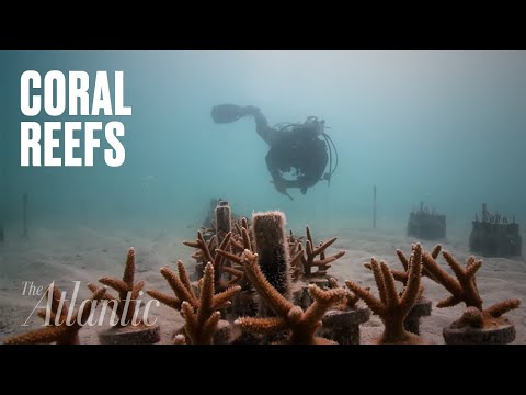 A Coral Reef Revival