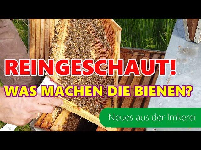 Doch alles gut? | Völkervergleich | Honigmenge | Blicke ins Bienenvolk | Neues aus der Imkerei