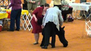 Feb 23 2012 Hattiesburg Ms Giant Schnauzer Best Of Breed Ring