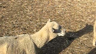 2014年5月に訪問した「服部牧場」でのヒトコマ。何か牧場の方がエ...