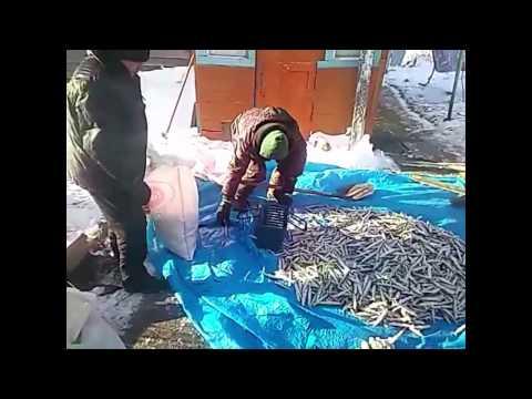 youtube рыбалка в де-кастри