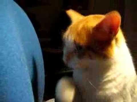 Gatto raffreddato youtube for Gatto che starnutisce
