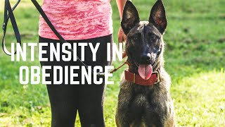 How to Build Power & Intensity in Obedience Using Frustration | Grassroots K9