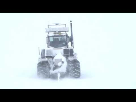 White Antarctic