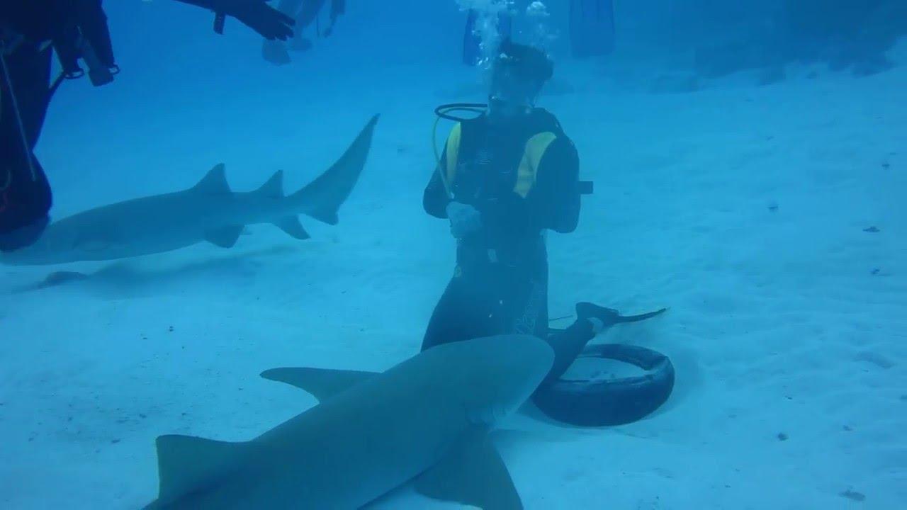 Maldive 2016 squalo nutrice youtube - Bagno con gli squali sudafrica ...