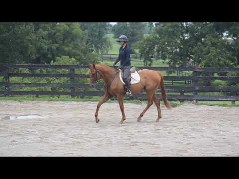 Pacific Surf - First Ride at the MMSC - OTTB Available for Adoption, Lexington, KY