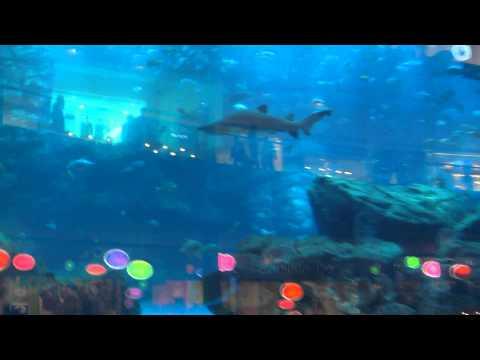Аквариум в Дубай Молле (2) - Aquarium in Dubai Mall 2013 Arab Emirates