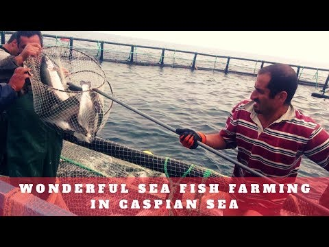 Wonderful Sea Fish Farming in Caspian Sea - دریای خزر ایران