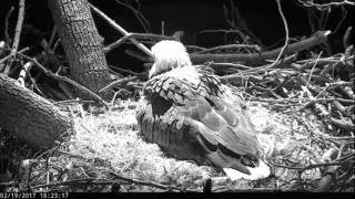 DC Eagle Cam - 2-19-17: The First Lady Lays An Egg!
