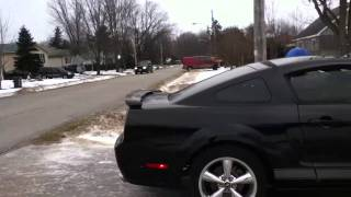 Mustang Out 1.MOV