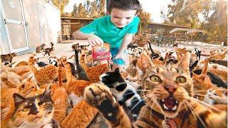 Найди ВСЕХ КОТОВ! Где котики КВеСТ ЧЕЛЛЕНДЖ Тима ПРОТИВ Загадок Папы Ищем LOST KITTIES/ТIMA TIME