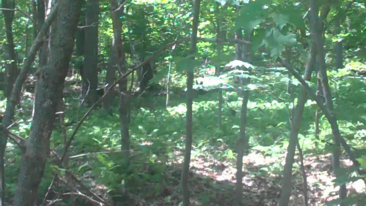 Black bear in woods pictures, daddies england nake