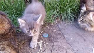 Отдам котенка, котик, возраст 1.5 месяца. Красноярск