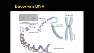 1 Bouw en functie DNA