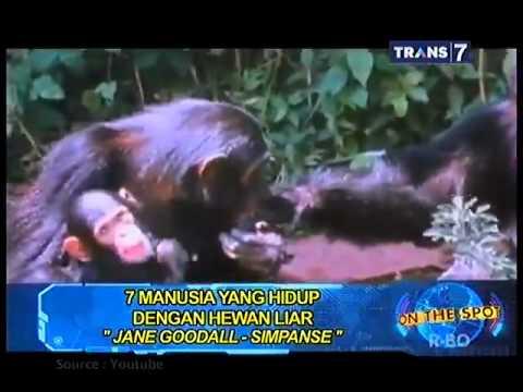 Video sexo manusia dengan hewan