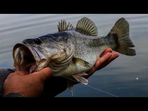Spring Bass Fishing (Lakeland, FL)