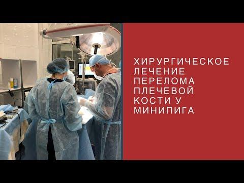 Хирургическое лечение перелома плечевой кости у минипига