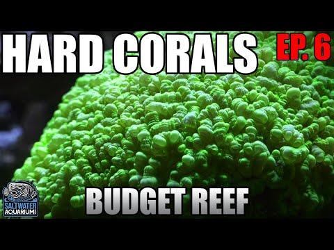 Chemistry Part 2 HARD CORALS Beginner Budget Reef Tank - Alkalinity, Calcium, Magnesium