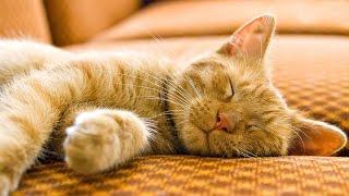 НЕОБЫЧНЫЕ ТОВАРЫ для ЖИВОТНЫХ. Топ 5(Необычные товары для животных | Необычные покупки для животных 00:06 - диван для кошек 00:22 - кровать для кошек..., 2016-02-11T14:04:36.000Z)