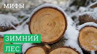 видео Зимний лес для строительства домов