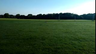 Amazing Beagle Obedience Training