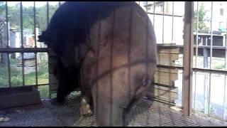 трах медведей в зоопарке