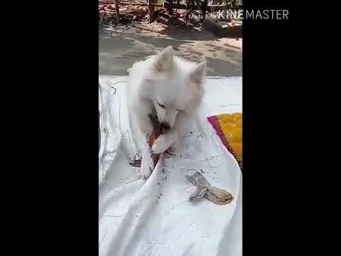 Funny Cats vs Dogs  (Funny Animals Compilation)