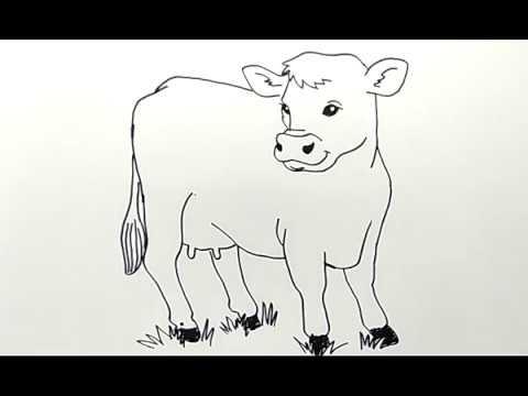 Cara Menggambar Sapi Dengan Mudah How To Draw Cow Easy Youtube