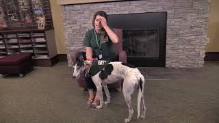 Peninsula Humane Society & SPCA Paws for Tales