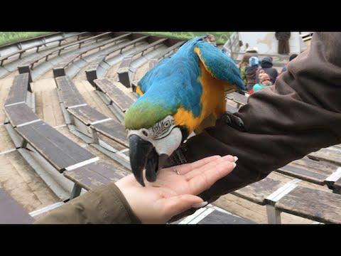 Im Zoo Hannover zu Besuch Vlog #11