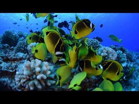 Hawaii Music and Nature - Snorkeling at Olowalu & Makena