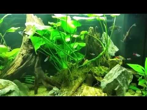 Aquarium Juwel Rio 125 (Volumen: 125l, Kantenlänge: 80 cm)