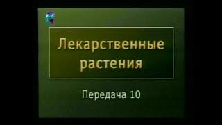 Передача 10. Растения, обладающие противовирусным и противобактериальным действием
