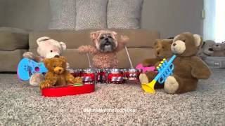 Munchkin the Teddy Bear drum solo