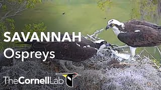 Cornell Lab Bird Cams Project