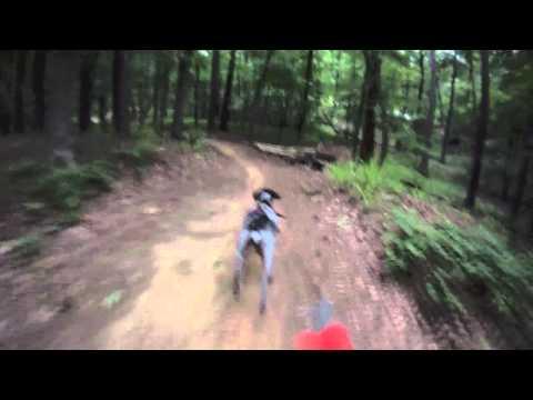 Ginger Bikejoring Oak Mountain (German Shorthaired Pointer)