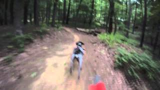 Ginger Bikejoring Oak Mountain (german Shorthaired Pointer)