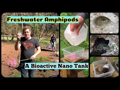 Freshwater Amphipods Care Sheet And Bioactive Tank Setup