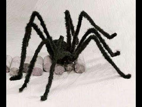 spooky halloween spider - Halloween Spider