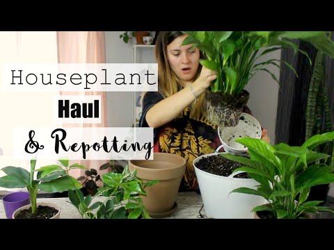 Houseplant Haul & Repotting! | Repot Houseplants with me & HAUL!