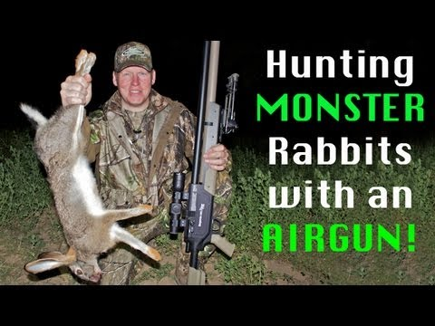 Extreme Airgun Hunting - Giant Rabbits With The Benjamin Rogue .357