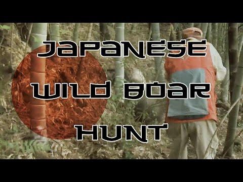 Japanese Wild Boar Hunt!