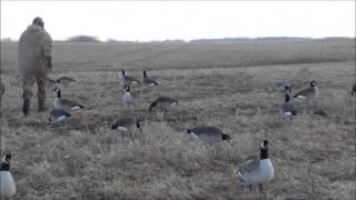 Охота на гусей на гороховом поле. Канада