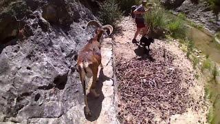 Video Ruta con Topy el Muflón - Sierra de Cazorla, Segura y las Villas download MP3, 3GP, MP4, WEBM, AVI, FLV November 2018