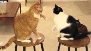 Cat Fight (The Fierce & Wild Killer Domestics) Death or Dishonor (part 2)