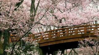Cherry Blossoms - Tea-House Moon