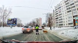 WHY DID THE DOG CROSS THE ROAD ?