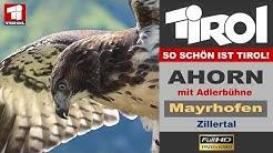 Ahorn und Adlerbühne in Mayrhofen - Zillertal