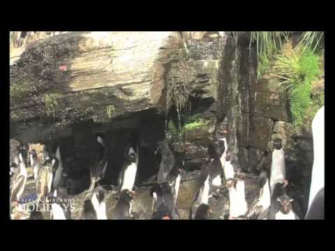 Falkland Islands Holidays